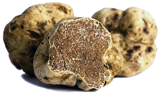 Fresh White Truffles byTruffle Guys